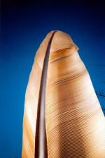 Neun Federn der Handschwinge einer Gans wurden auf 3,50 bis 4.60 Meter vergrößert.