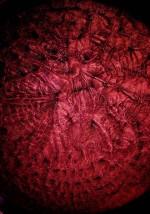 Formen der Selbstorganisation: Selbstorganisationsprozess am Rande von Chaos<br />Pigmentdruck Nr: 3251R